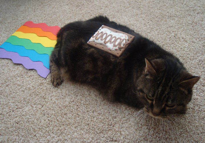 Real Nyan Cat